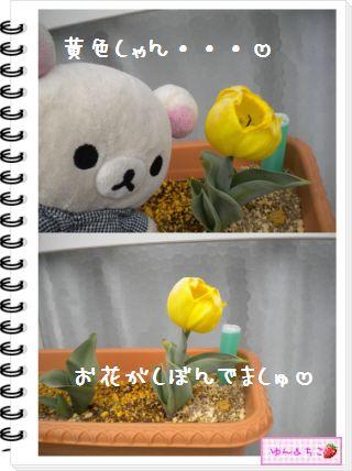 ちこちゃんの観察日記2012★18★チューリップの観察11-5