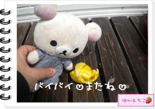 ちこちゃんの観察日記2012★19★チューリップの観察12~ありがとう黄色しゃん~-4