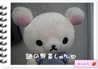 ちこちゃんの観察日記★20★謎の野菜7~野菜の名前発表~-1