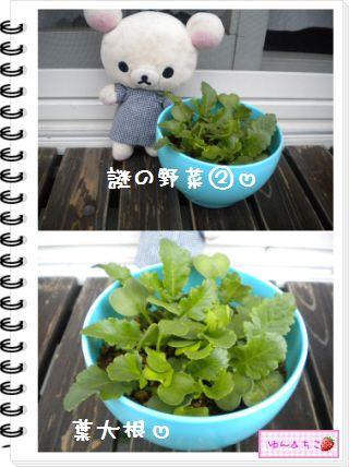 ちこちゃんの観察日記★20★謎の野菜7~野菜の名前発表~-4