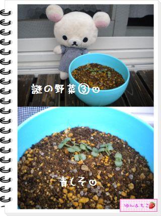ちこちゃんの観察日記★20★謎の野菜7~野菜の名前発表~-5