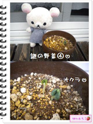 ちこちゃんの観察日記★20★謎の野菜7~野菜の名前発表~-6