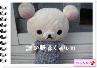 ちこちゃんの観察日記2012★21★謎の野菜8