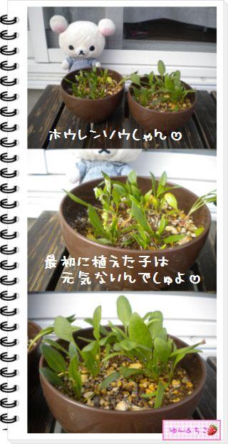ちこちゃんの観察日記2012★21★謎の野菜8-2