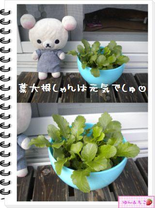 ちこちゃんの観察日記2012★21★謎の野菜8-3