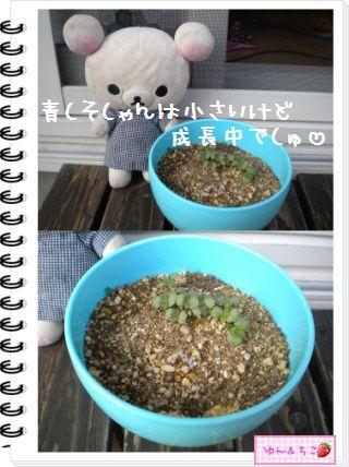 ちこちゃんの観察日記2012★21★謎の野菜8-4