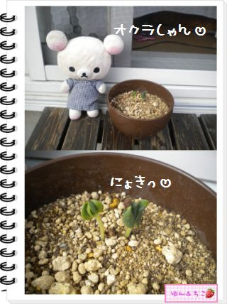 ちこちゃんの観察日記2012★21★謎の野菜8-5