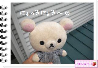 ちこちゃん日記★131★にょきにょき豆苗しゃん日記-1