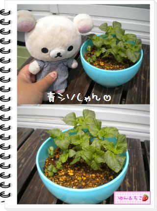 ちこちゃんの観察日記2012★22★謎の野菜9-3