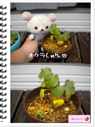 ちこちゃんの観察日記2012★22★謎の野菜9-2