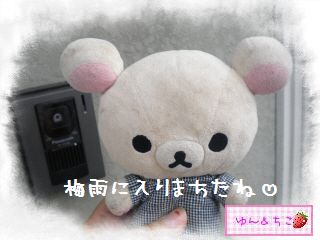 ちこちゃん日記★132★夏らしいお花-1