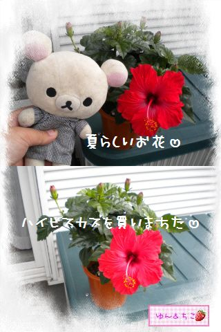 ちこちゃん日記★132★夏らしいお花-2