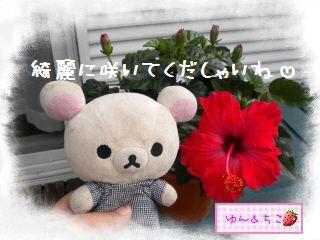 ちこちゃん日記★132★夏らしいお花-3