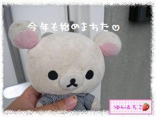 ちこちゃんの観察日記2012★夏野菜の観察★1-1