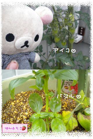 ちこちゃんの観察日記2012★夏野菜の観察★1-2
