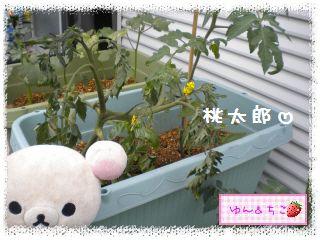 ちこちゃんの観察日記2012★夏野菜の観察★1-3