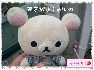 ちこちゃんのあさがお日記2012★1★-2