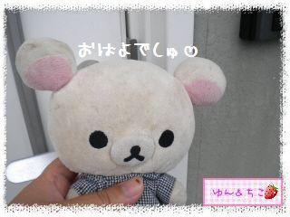 ちこちゃんのあさがお日記2012★1★-1
