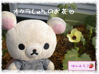 ちこちゃんの夏野菜観察日記2012★4★オクラしゃんのお花★-3