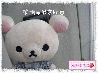 ちこちゃんの夏野菜観察日記2012★5★辛~いでしゅよ♪-1