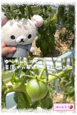 ちこちゃんの夏野菜観察日記2012★6★もうすぐ収穫♪-3