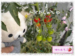 ちこちゃんの夏野菜観察日記2012★7★初収穫♪-3