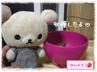 ちこちゃんの夏野菜観察日記2012★7★初収穫♪-4