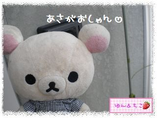 ちこちゃんのあさがお観察日記2012★2★-1
