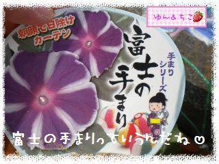 ちこちゃんのあさがお観察日記2012★2★-3