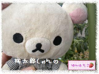 ちこちゃんの夏野菜観察日記2012★9★桃太郎しゃん♪-1