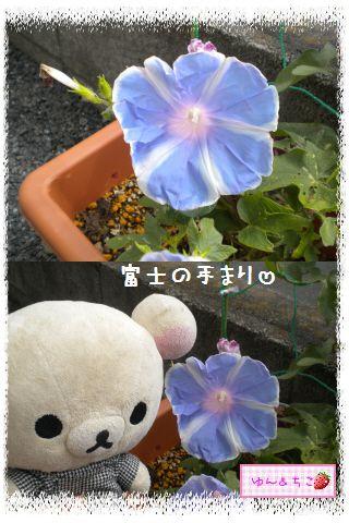 ちこちゃんのあさがお観察日記2012★3★-4