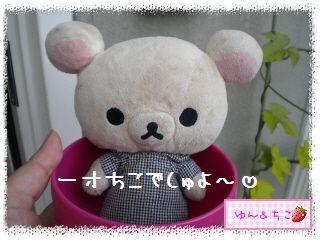 ちこちゃん日記★145★唐辛子しゃん♪-1