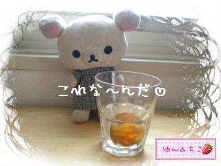 ちこちゃんのアボカド栽培日記★1★-2