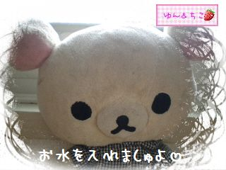 ちこちゃんのアボカド栽培日記★1★-6