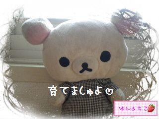 ちこちゃんのアボカド栽培日記★1★-3