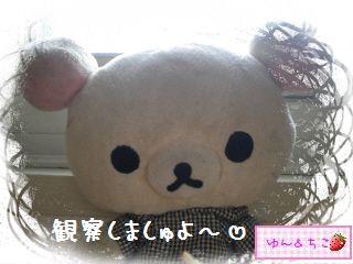 ちこちゃんのアボカド栽培日記★1★-8