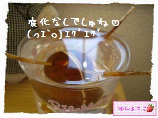 ちこちゃんのアボカド観察日記★3★15日目~21日目-2