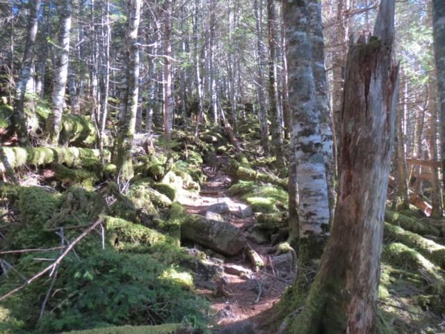 10月19日 苔に覆われた林