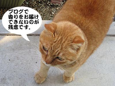 12_11_16_3.jpg