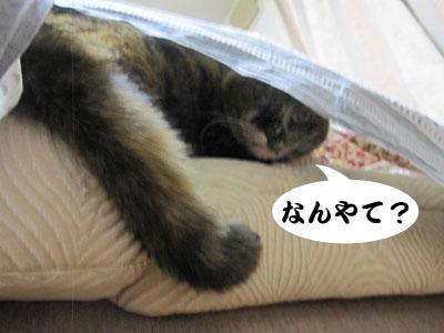 12_12_18_3.jpg