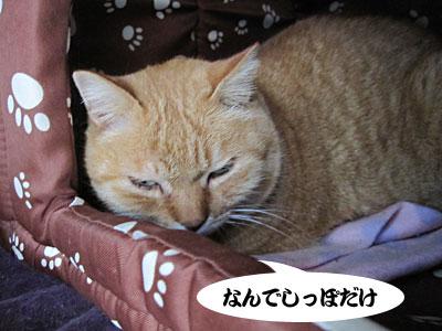 13_01_02_1.jpg