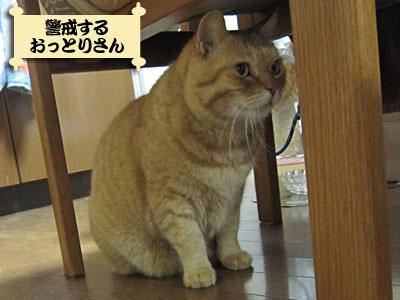 13_01_10_4.jpg