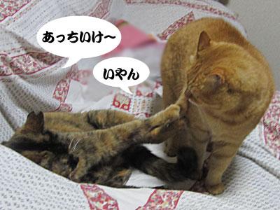 13_01_16_3.jpg