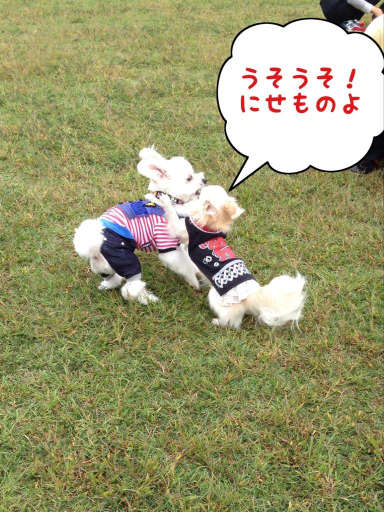 fc2blog_201410160730138a2.jpg