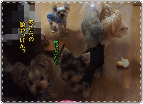 DSC04589_20121129065633.jpg