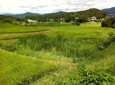 chikushino0827-mare-11.jpg