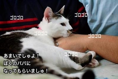 fc2blog_20140126031405605.jpg