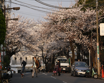 IMG_4083桜