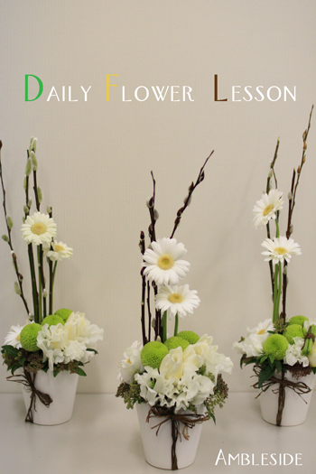 IMG_8599-Daily-Flower-1gatu.jpg