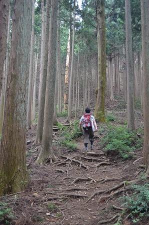 棒ノ折山__47